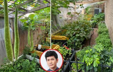 Ngắm vườn rau 350 m2 của ca sĩ Quách Thành Danh ở Mỹ
